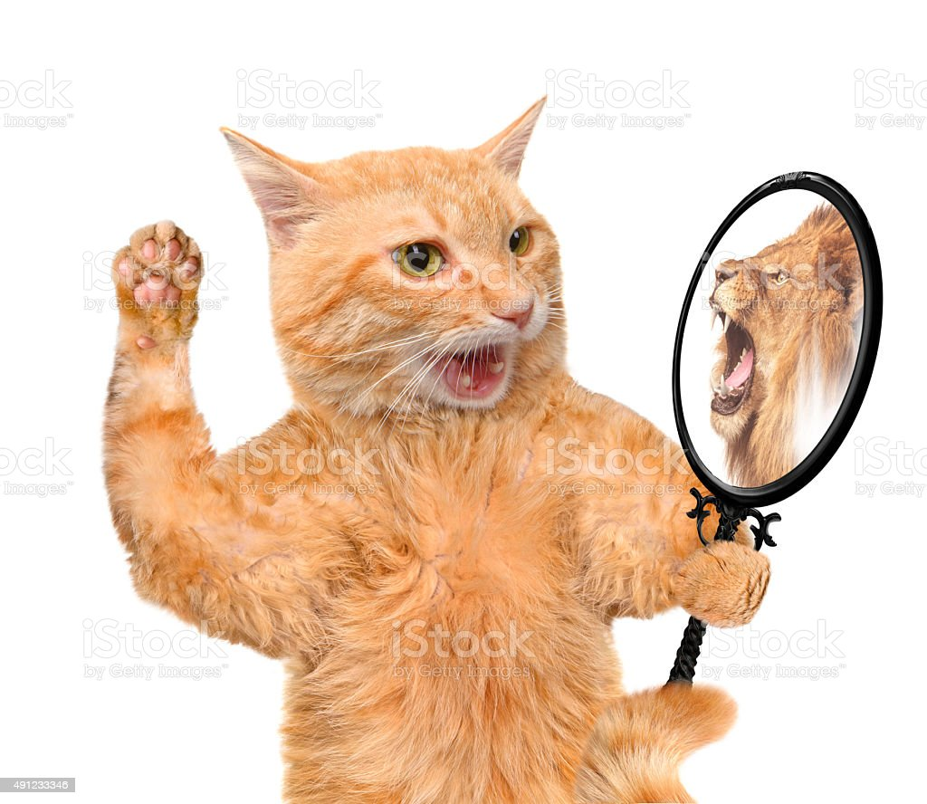 Cat looking into the mirror . stock photo