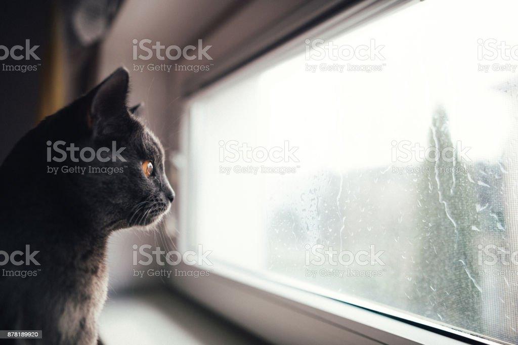 Katze auf der Suche an einem regnerischen Tag – Foto