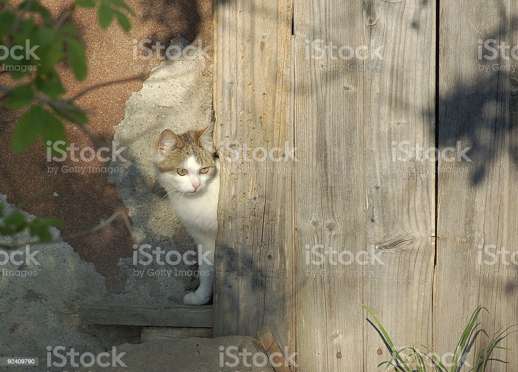 Cat looking out the Door royalty-free stock photo
