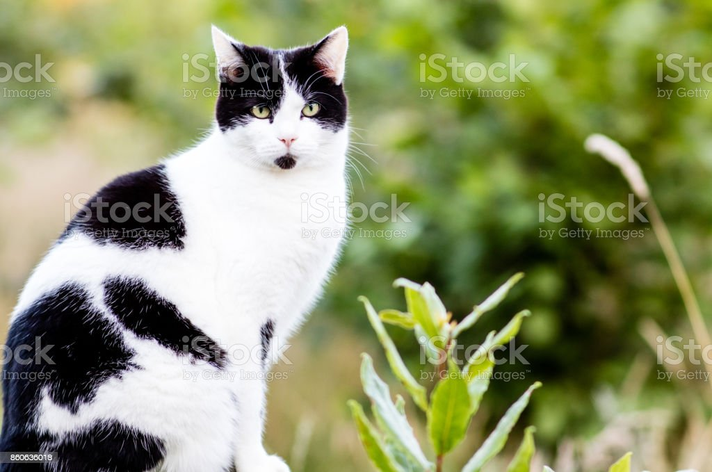 A cat looking straight at the camera stock photo