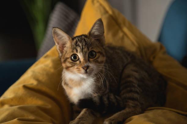 Cat Looking Surprised stock photo