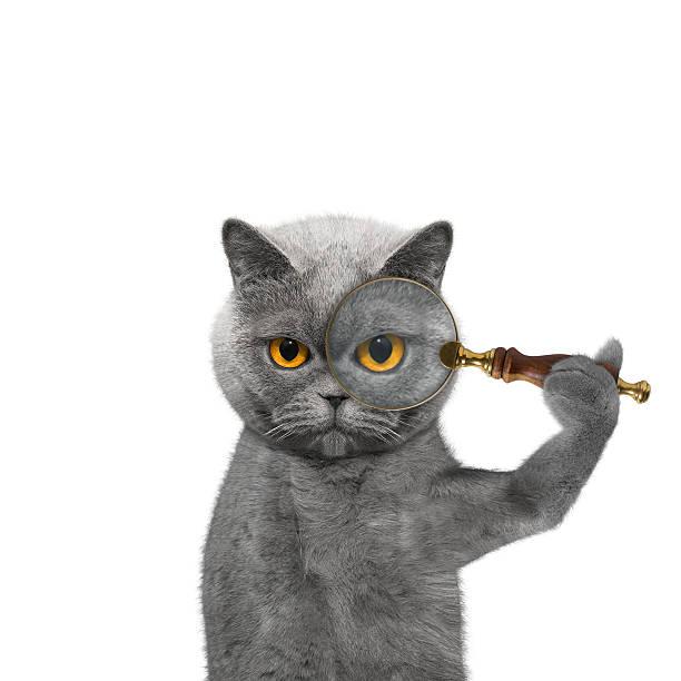 katze, die durch ein lupe loup - suche katze stock-fotos und bilder