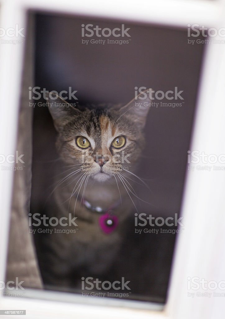 Cat Looking Through a Window stock photo