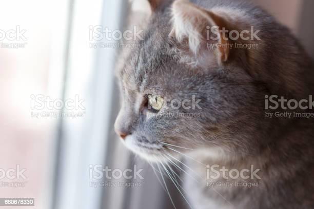 Cat looking through a window picture id660678330?b=1&k=6&m=660678330&s=612x612&h=lntbz2 fnld06leema 0qayjbjf88ghmgrpglyrfma0=