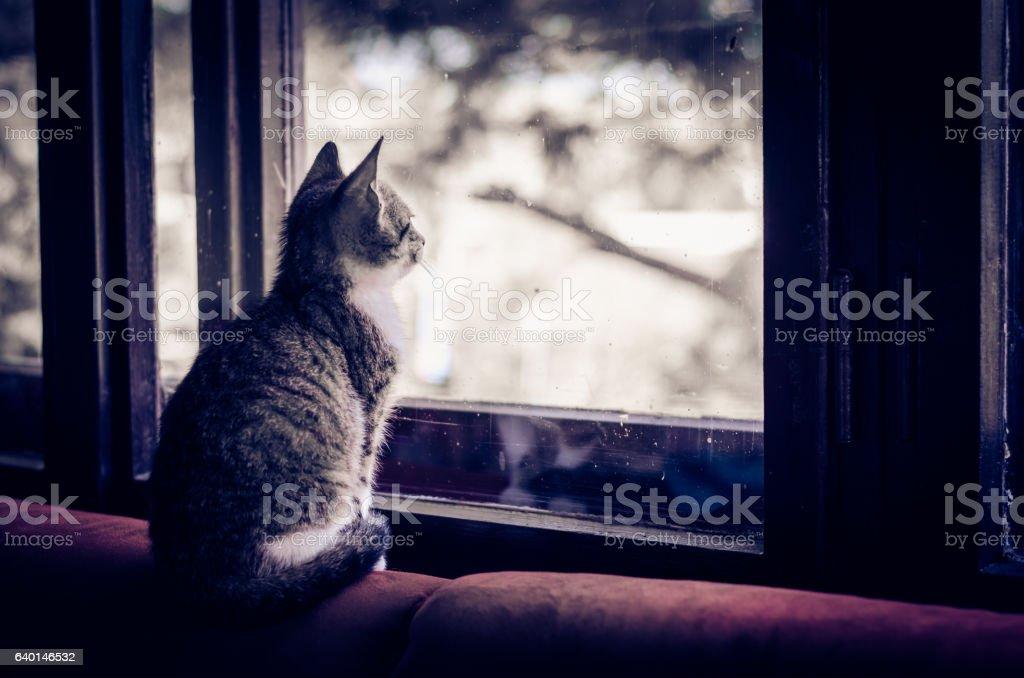cat looking throught window – Foto