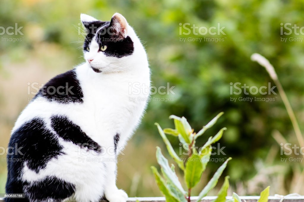 A cat looking to its right stock photo