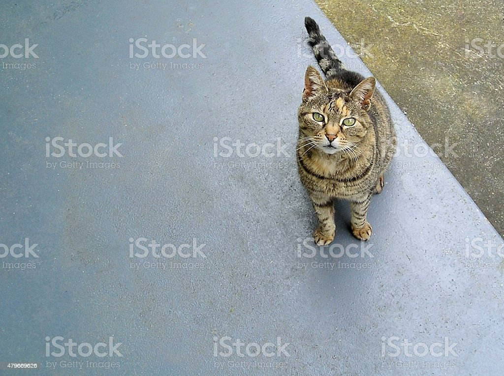 Cat looking up 01 stock photo
