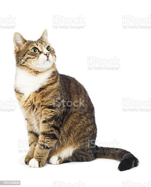 Cat looking up copy space isolated picture id104233605?b=1&k=6&m=104233605&s=612x612&h=clwoulquzatnunlafjlgehfrcdeiaom4n fe8itrvtw=