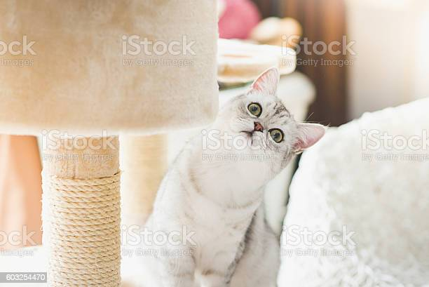 Cat looking up on cat tower picture id603254470?b=1&k=6&m=603254470&s=612x612&h=rg5rqpc7rw3vp wrsofqpagzi1pexqyupjceggbegz8=