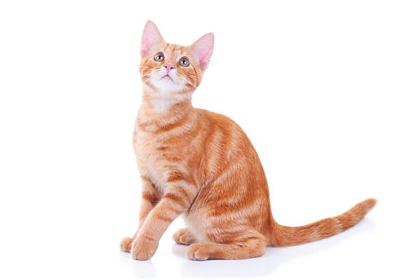 Cat looking up picture id465623901?b=1&k=6&m=465623901&s=612x612&w=0&h=gtb4zljwqay2u0zcy0s3pymyhcdfnqz4ngbjtoyru1m=
