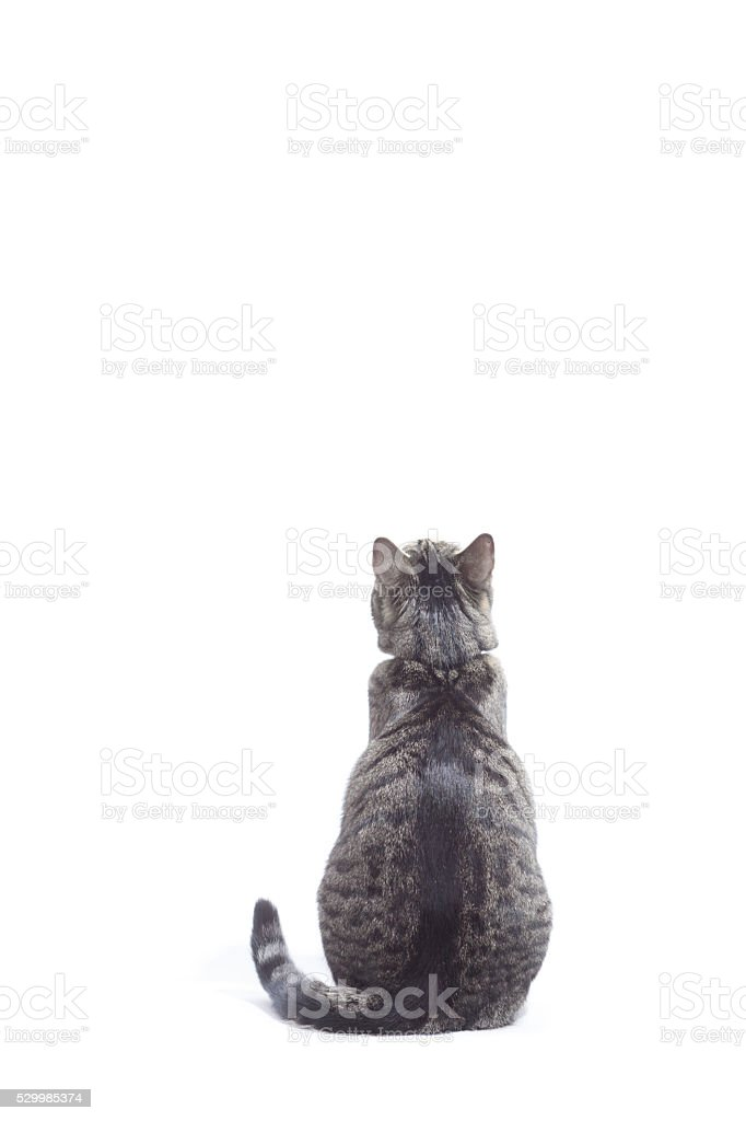 Cat looking up, shot from behind. stock photo