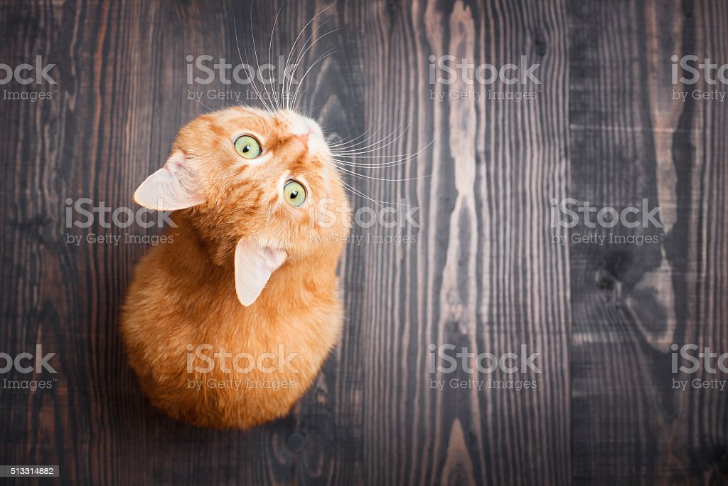Cat looking up sitting on the wooden background stock photo