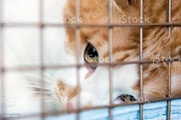 Cat looking up through the bars of his cage picture id116813305?b=1&k=6&m=116813305&s=612x612&h=nmpg9v6go1 di9l8 dxctljo5v8apbrlzzgxlwpanq4=