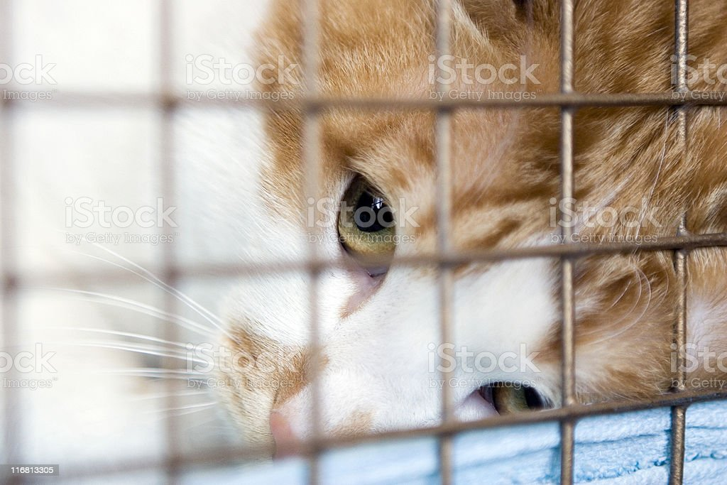 Cat looking up through the bars of his cage. stock photo