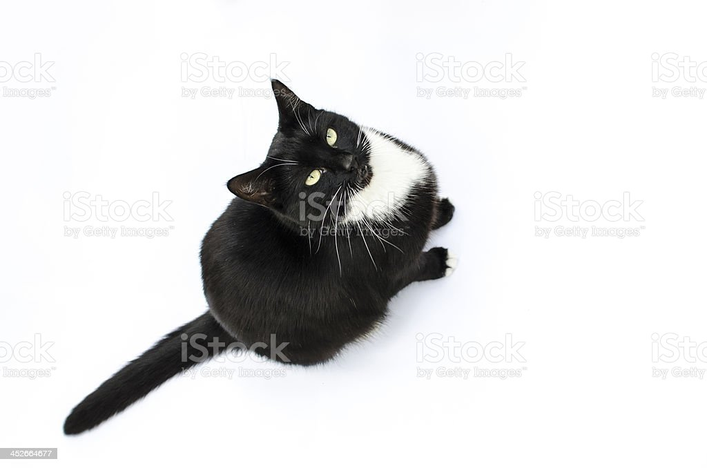 Cat looking up to camera royalty-free stock photo