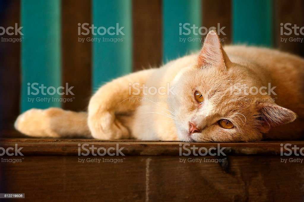 cat, looking,Thailand stock photo