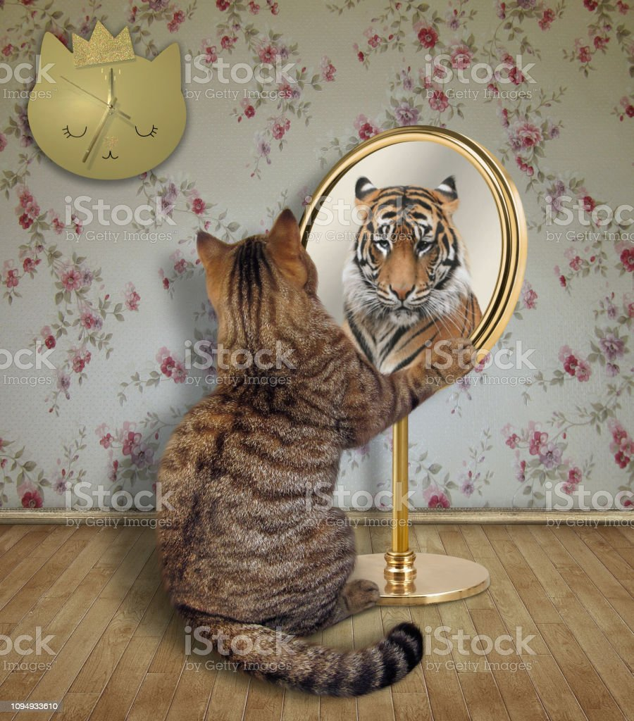Cat looks at a tiger in the mirror stock photo