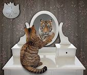 The cat is looking at his funny reflection in the mirror at home. It sees a tiger there.