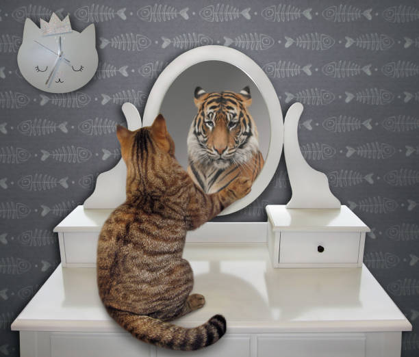 Cat looks at his funny reflection stock photo