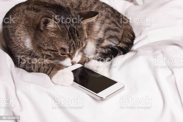 Cat looks into the phone picture id857933670?b=1&k=6&m=857933670&s=612x612&h=vtwrhpxuzxiqxglffq 77zfreq2nfqto55abn0xkfau=
