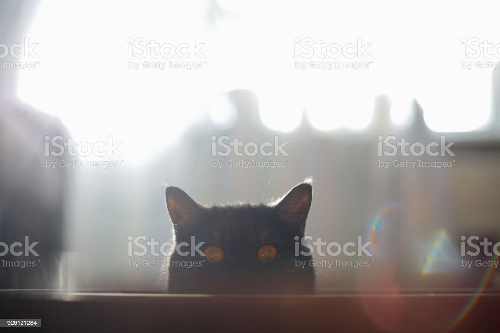 A cat looks out of hiding, surprise, hunting, fright, sunlight, ears,...