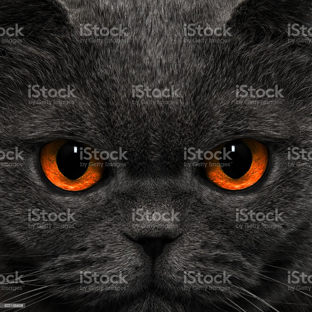 Cat looks strange look in the night stock photo