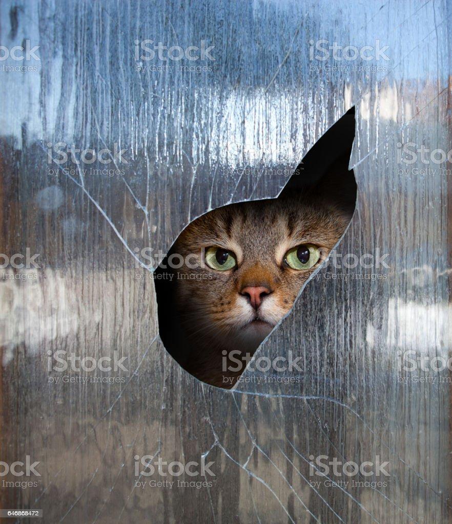 cat looks through a window stock photo