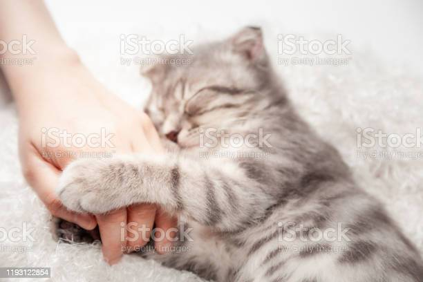 Cat love by the hand grip at hand happy cat lovely comfortable by picture id1193122854?b=1&k=6&m=1193122854&s=612x612&h=fixyiodevvw66eohbqmwsiuhc2pyya5emlciirp nae=