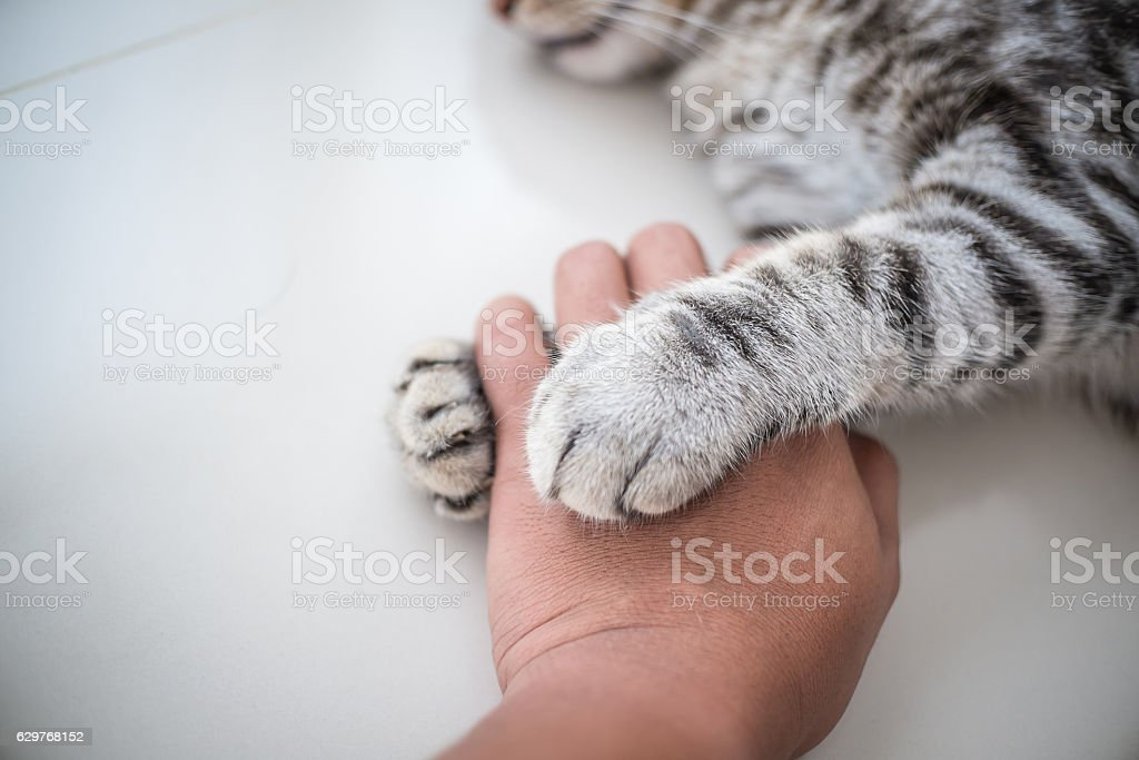 Cat love By the hand grip at hand. stock photo