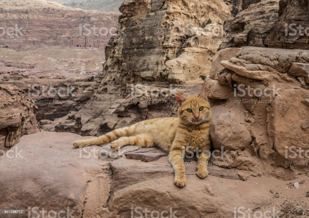 Cat lying down in Petra stock photo