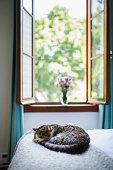 animal, domestic cat, animal themes, bedroom