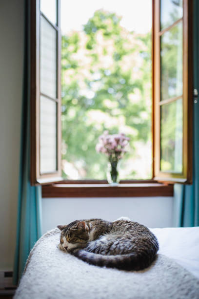 Cat lying down on a bed stock photo