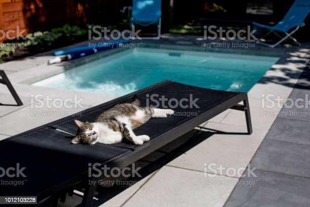 Cat lying down on a deck chair near a swimming pool picture id1012103228?b=1&k=6&m=1012103228&s=612x612&h=hai7rsalr8ifgypt9cczptzahmipddtbxw9gc0nzngg=