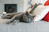 istock Cat lying down on a sofa 1043748292