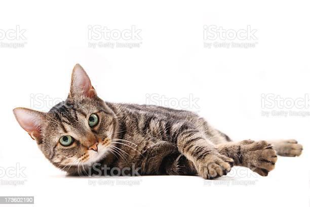 Cat lying down picture id173602190?b=1&k=6&m=173602190&s=612x612&h=dzsez6zehv3phk2boemzqjrepjpfeaxrzps93iar5pa=
