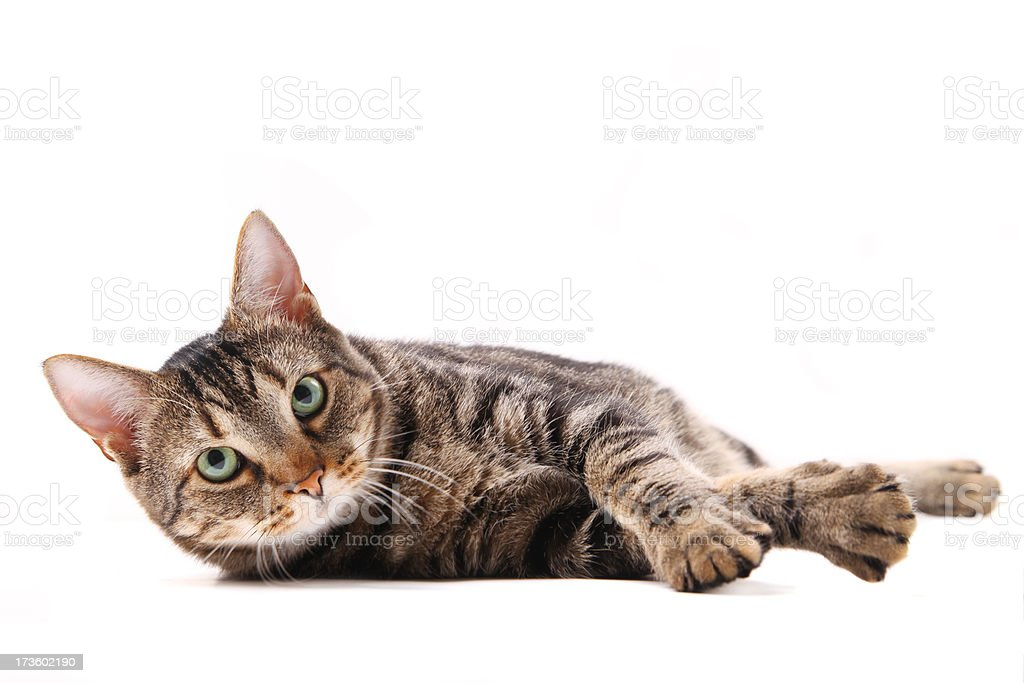 Cat lying down stock photo