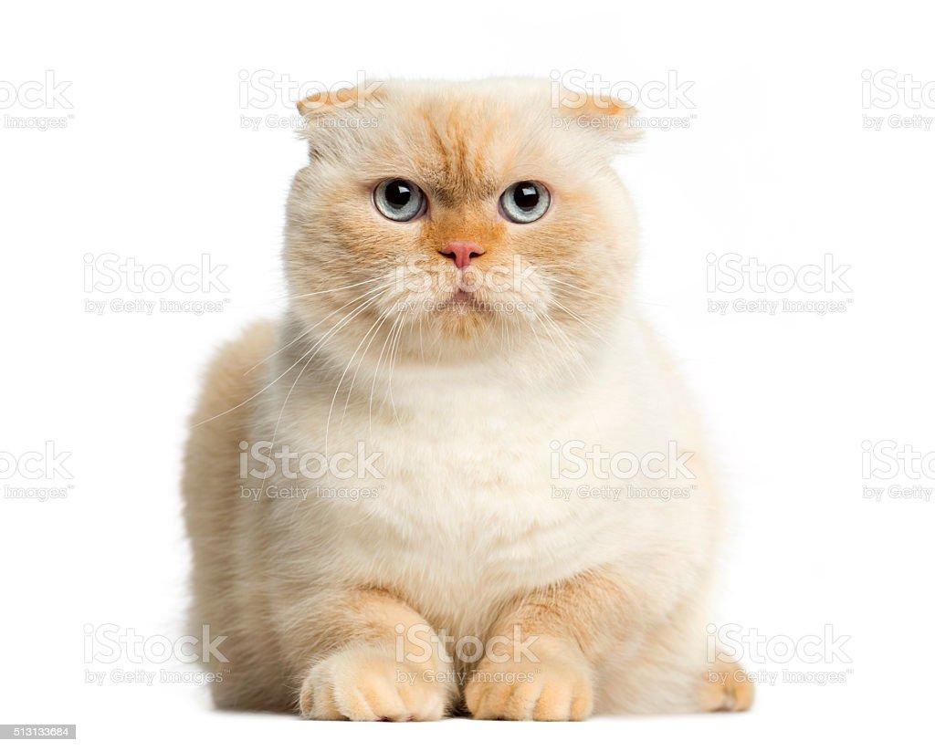 Kot Leży W Przód Na Białe Tło Stockowe Zdjęcia I Więcej Obrazów