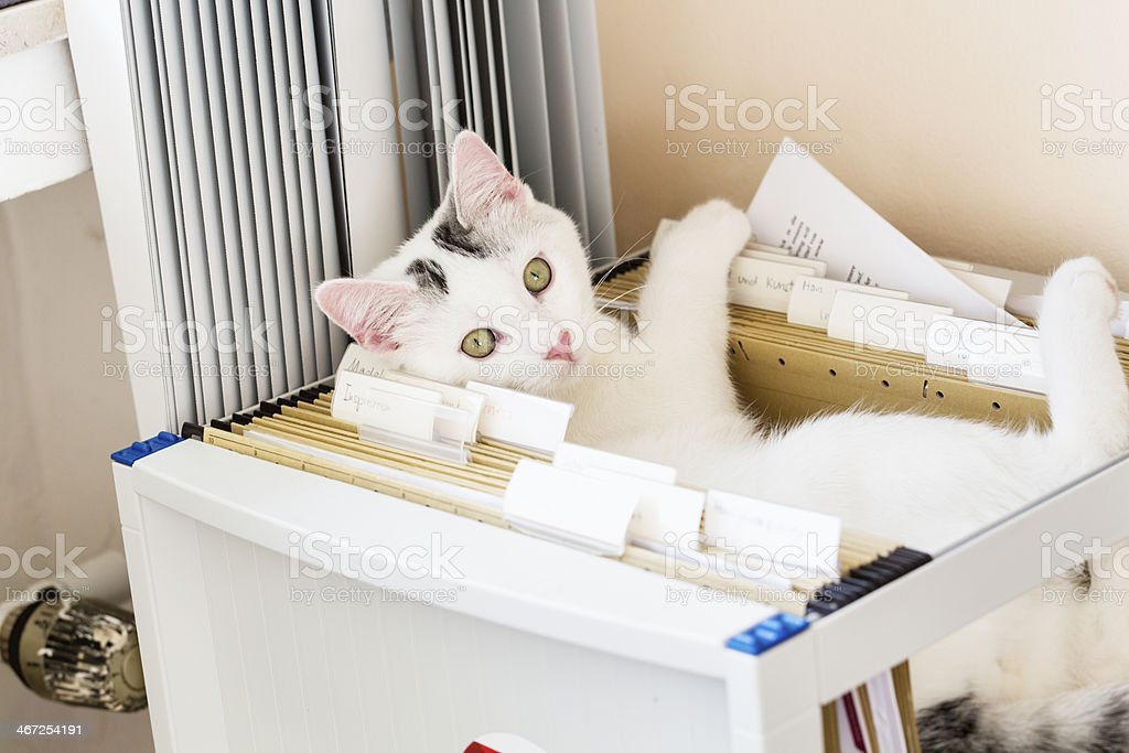 cat lying in hanging files office stock photo