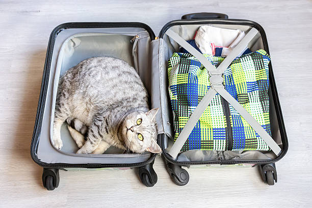 Cat lying in packed suitcase picture id599496240?b=1&k=6&m=599496240&s=612x612&w=0&h=waufzsx1whnwgwv9rxndis d17hpppgkmsh 1niru0e=
