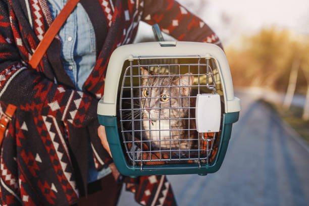 cat lying in plastic carrier outdoors stock photo