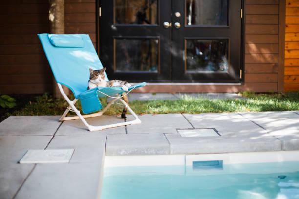 eine katze liegend auf einem stuhl in der nähe eines swimming pools - traum pools stock-fotos und bilder