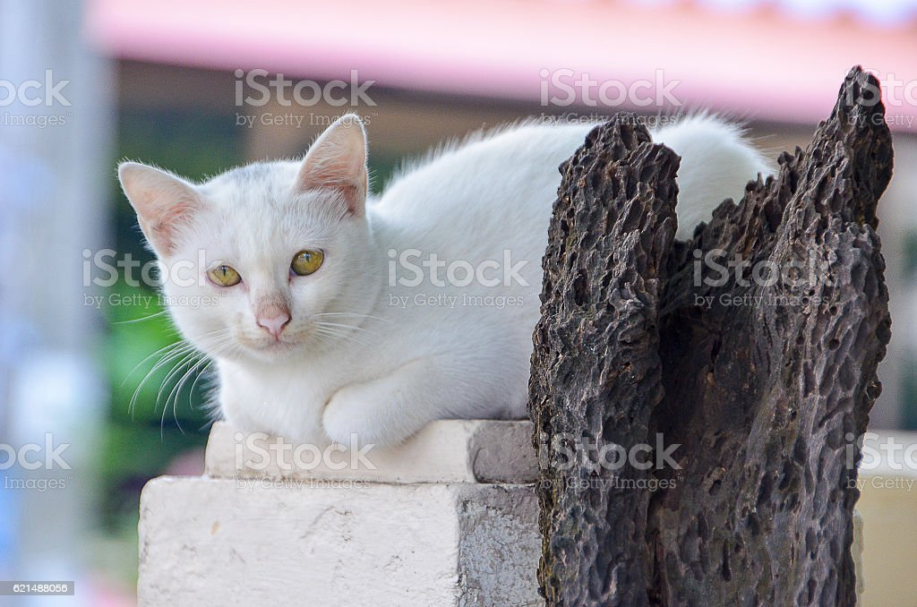 Cat lying on a pole and old dry tree Lizenzfreies stock-foto