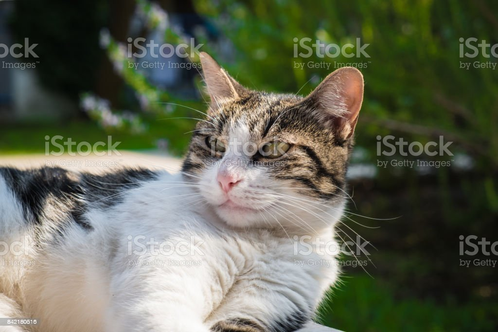 Cat lying on a white bench stock photo