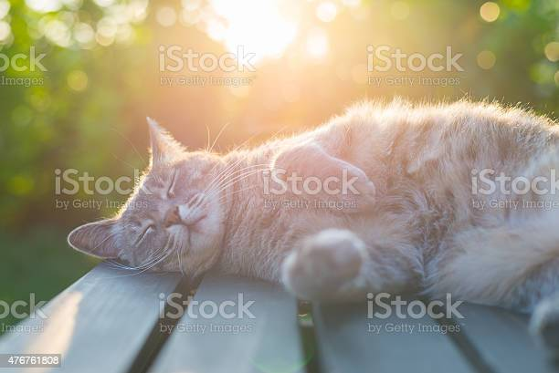 Cat lying on bench in backlight at sunset picture id476761808?b=1&k=6&m=476761808&s=612x612&h=jdnkebgahimb2ijf4jorew fdj2pivm3f1xvtcnfnms=