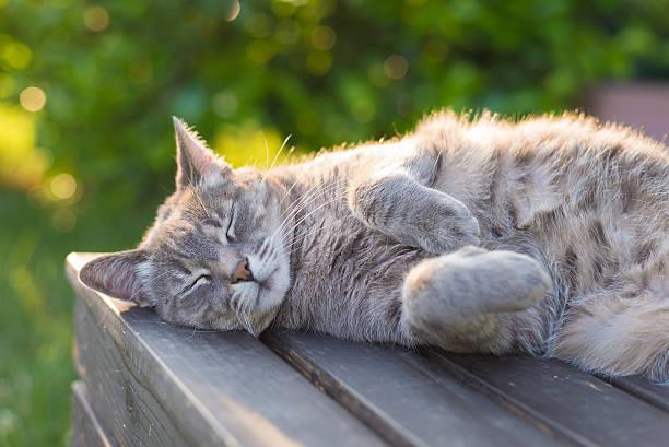 кошка лежа на скамье в подсветка на закате - котик яркий стоковые фото и изображения