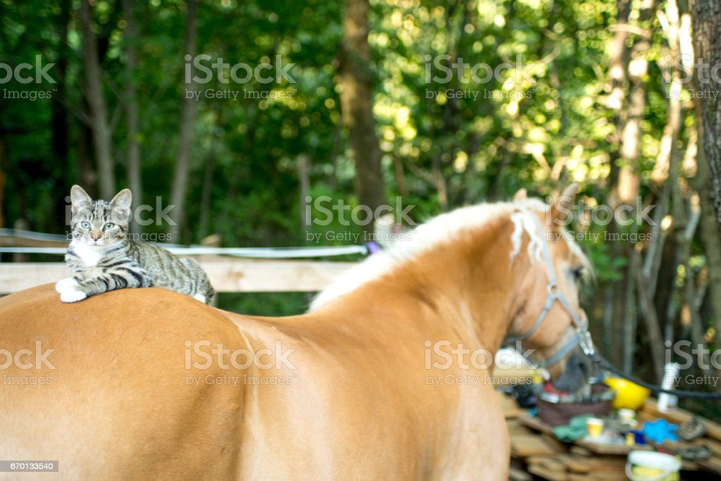 Cat Lying On Horse Back stock photo