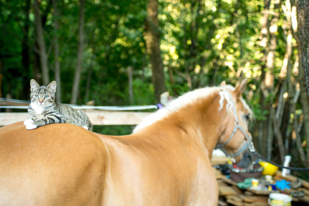 Cat Lying On Horse Back stock photo