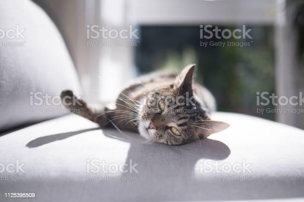Cat lying on sofa picture id1125395509?b=1&k=6&m=1125395509&s=612x612&h=c4ote9fbrv3p1fjjwunlpmehy6e 5eyc4ajxxwafnbo=