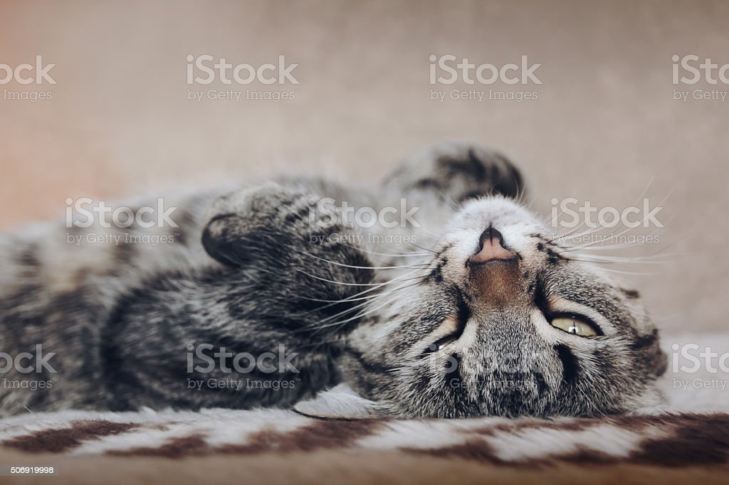 cat lying on soft bed and looking stock photo