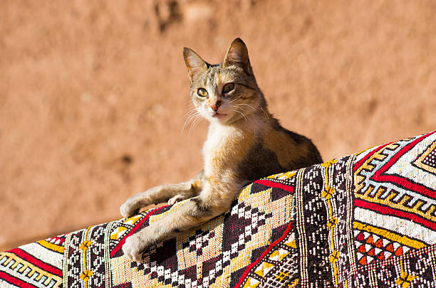 Cat lying on the carpet in african country stock photo